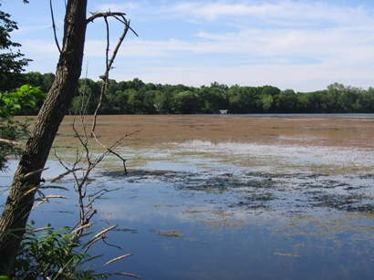 Lake Minnetoka AIS